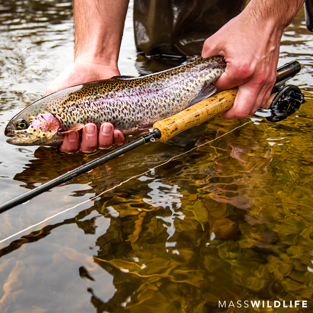 Hopkinton Earth Week Trout Stocking - Local Event - Discover Central