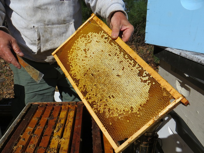The Honey Bees in Our Environment - Local Event - Discover