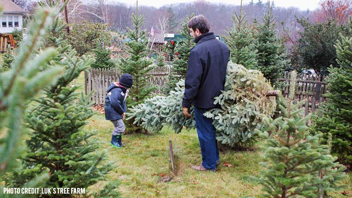 Where to Buy a Christmas Tree in Central Massachusetts - Discover ...