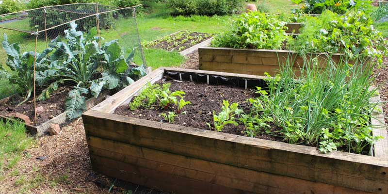 7 Steps to Starting Your Own Garden This Spring - Discover ...