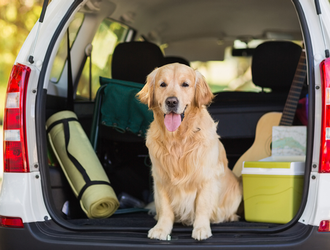 Take Your Dog on a Day Trip in Central Massachusetts