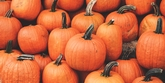Pumpkin Passport: Exclusive Guide to Central MA Pumpkin Patches, Events, Dishes, Drinks & Sweets
