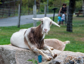 Green Hill Petting Zoo, Worcester