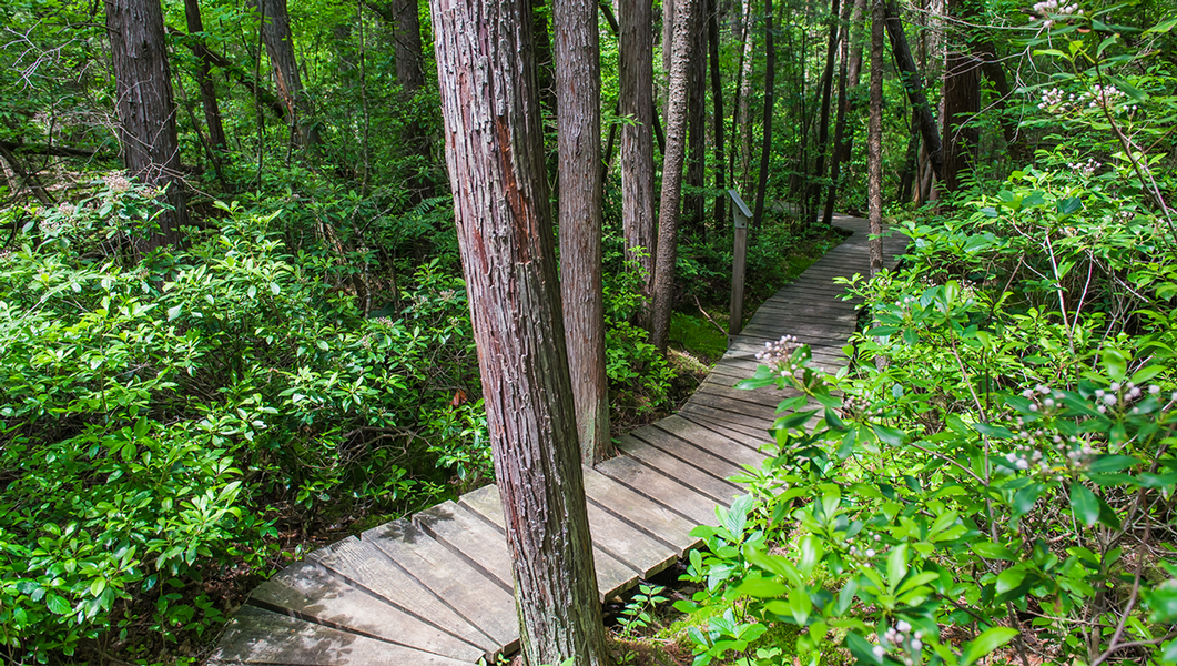 You Won't Believe These Hikes Exist in Central Mass.